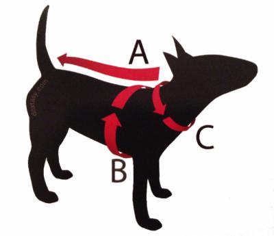 Maat bepalen voor hondenkleding